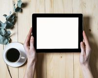 Tableta del primer con un monitor vac?o de la pantalla en blanco en las manos de las muchachas con una rama del eucalipto y una t fotos de archivo libres de regalías