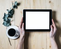 Tableta del primer con un monitor vacío de la pantalla en blanco en las manos de las muchachas con una rama del eucalipto y una t imagen de archivo
