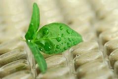 tabletki ziołowe Fotografia Stock