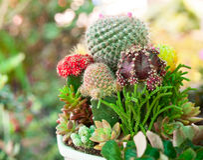 Tabletop cactus garden Royalty Free Stock Photography