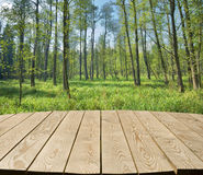 Tabletop with deciduous forest Stock Photo
