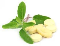 Tabletten met geneeskrachtig heilig basilicum Stock Foto's