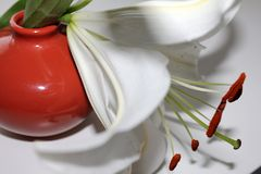 Tableware, Flower, Cup, Still Life Photography