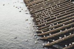 Tabliers de glace de Charles Bridge - Prague, République Tchèque photo libre de droits