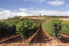 Établissement vinicole Photos stock