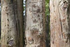 Tablones de madera grandes, oscuros, viejos con la hierba verde Menú para el restaurante orgánico Fondo para los prospectos, cart Fotografía de archivo libre de regalías
