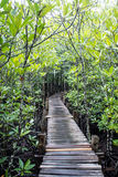 Taboon rośliny las Obraz Royalty Free