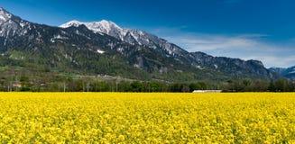 Taborowy mkni?cie przez kraju krajobrazu z snowcapped rapeseed canola polami i g?rami obraz stock