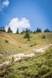 tabunowa góra wypasa cakle fotografia stock