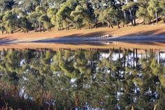 tabunowy brzeg rzeki zdjęcie royalty free