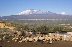 tabunowy sheepfold fotografia royalty free