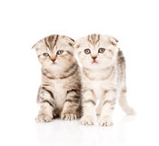 在前面的两只taby小猫 背景查出的白色 库存照片
