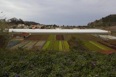 Tacaronte, España, noviembre de 2017: Paisaje rústico Campos de los granjeros Imagenes de archivo