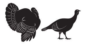 Tacchino dell'uccello Fotografia Stock