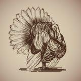Tacchino dell'uccello nello stile di schizzo Immagini Stock Libere da Diritti