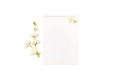 Taccuino in bianco con un ramo di un gelsomino di fioritura sopra Fotografie Stock