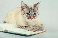 Taccuino della lettura del gatto Fotografia Stock Libera da Diritti
