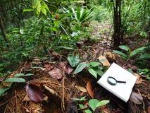 Taccuino, priorità bassa tropicale della foresta pluviale Fotografia Stock