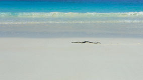 Tachai Island Royalty Free Stock Image