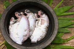 Tache crue fraîche de perle ou poissons verts de chromide d'Inde du Kerala Photo stock