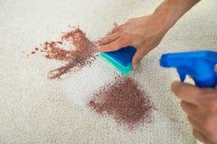 Tache de nettoyage d'homme sur le tapis avec l'éponge Photos stock