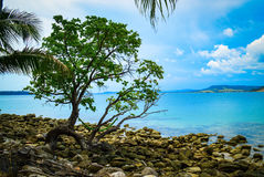 Tache de paradis Photo libre de droits