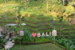 Tache de Selfie devant les terrasses de riz de Tegalalang Photo libre de droits