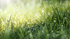 Tache de Sun sur la pelouse photographie stock libre de droits