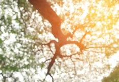 Tache floue de Bokeh d'arbre naturel pour le fond de texture Photographie stock libre de droits