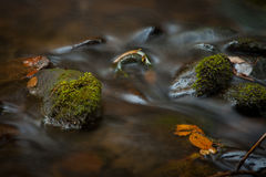 Tache floue de creekside de début de la matinée Image stock