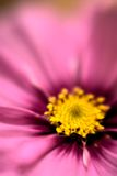 Tache floue de fleur Photo libre de droits