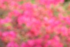 Tache floue de fleur de bouganvillée Image stock