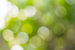Tache floue de l'arbre Photos libres de droits