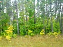 Tache floue de la forêt image libre de droits