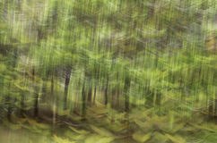 Tache floue de mouvement, tronc d'arbres et congé abstraits, backgrou de vert jaune Photo stock