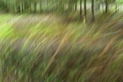 Tache floue de mouvement, tronc d'arbres et congé abstraits, backgrou de vert jaune image libre de droits