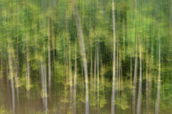 Tache floue de mouvement, tronc d'arbres et congé abstraits, backgrou de vert jaune Photographie stock libre de droits