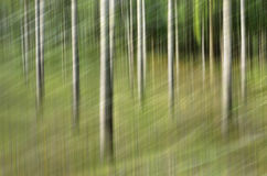 Tache floue de mouvement, tronc d'arbres et congé abstraits, backgrou de vert jaune images stock