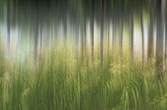 Tache floue de mouvement, tronc d'arbres et congé abstraits, backgrou de vert jaune Photographie stock