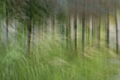 Tache floue de mouvement, tronc d'arbres et congé abstraits, backgrou de vert jaune Photos stock