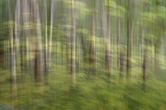 Tache floue de mouvement, tronc d'arbres et feuilles abstraits, backgro de vert jaune photographie stock libre de droits