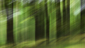Tache floue de mouvement, tronc d'arbres et feuilles abstraits, backgro de vert jaune Images stock