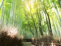 Tache floue et doux abstraits de forêt en bambou verte Image stock