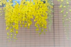 Tache floue jaune de fleur sur la nature crème de fond Images stock