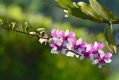 Tache floue pourpre d'orchidée après tir Photo stock
