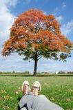 Tache idyllique de fuite de ville d'automne Arbre rouge et ciel bleu Photographie stock libre de droits