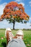 Tache idyllique de fuite de ville d'automne Arbre rouge et ciel bleu Photo stock