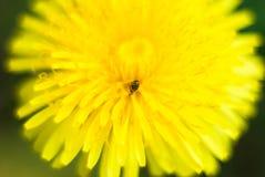 Tache jaune Photographie stock