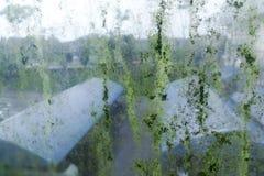 Tache peu hygiénique sale de moule sur le vitrail parce qu'humidité image libre de droits