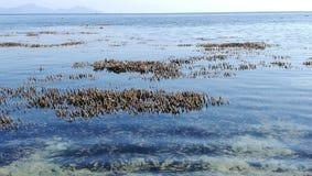 Tache se concentrant sur des coraux apparaissant au-dessus de la surface de la mer pendant la marée basse avec l'horizon image stock